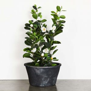 Blom Rose Large Pot