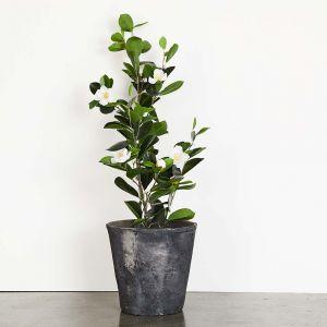 Blom Standard Large Pot