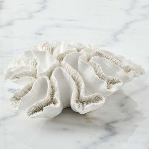 Ecology Coral Lettuce