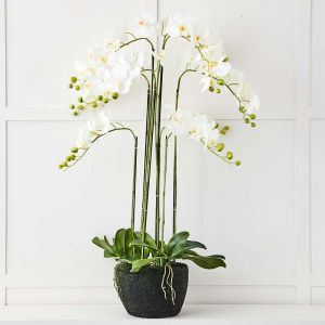 Blume 9 Stem Orchid