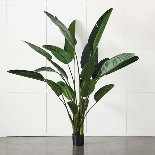 Potted Plant Palm