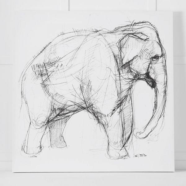 Elephant Canvas 110x110