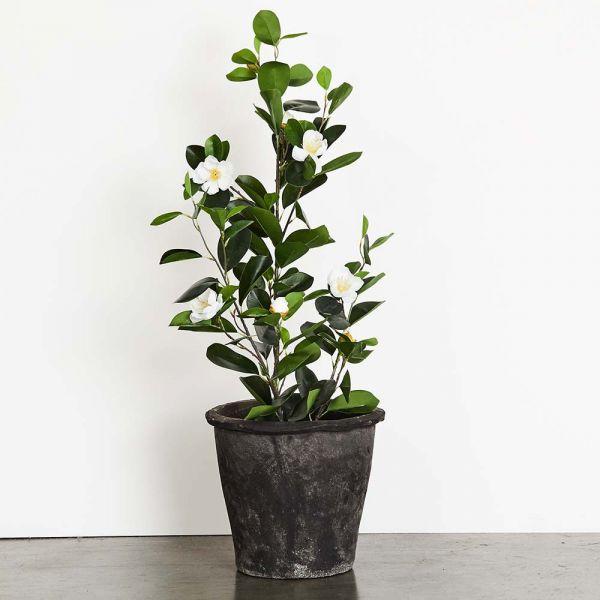 Blom Azalea Medium Pot