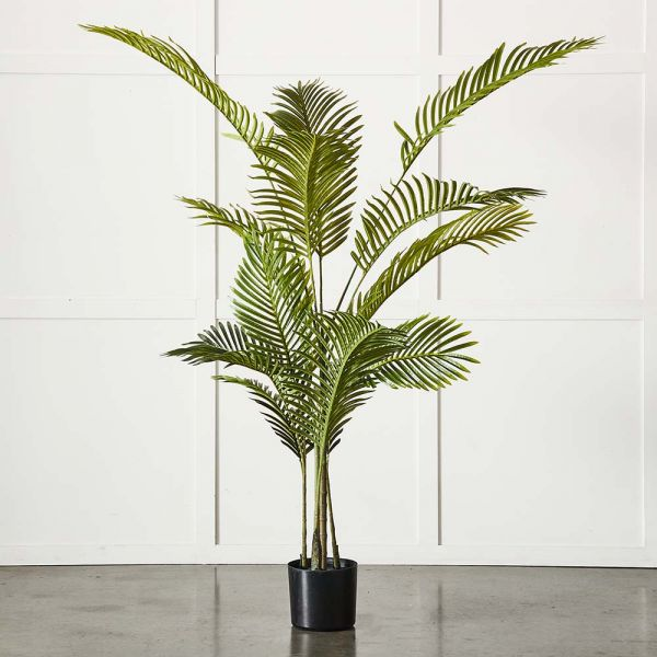 Potted Areca Palm Plant